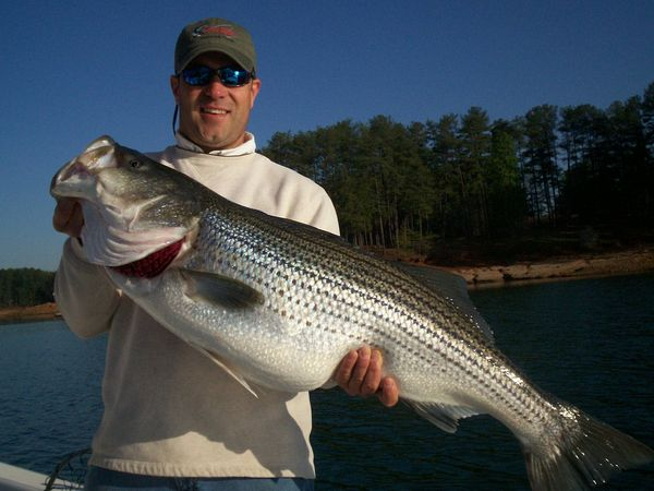 Find fishing guides charters for Lake lanier fishing