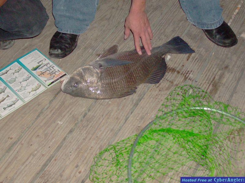 Just SHUT UP and fish