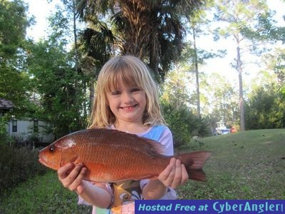 Hayley's Mangrove Snapper