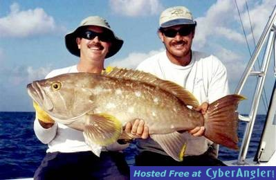 35# Yellow Edge Grouper