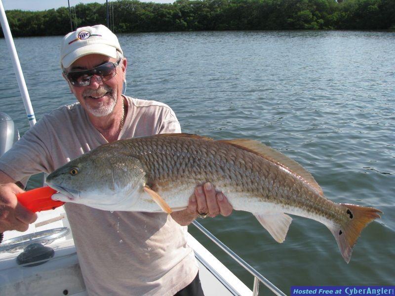 Tampa Bay Redfish