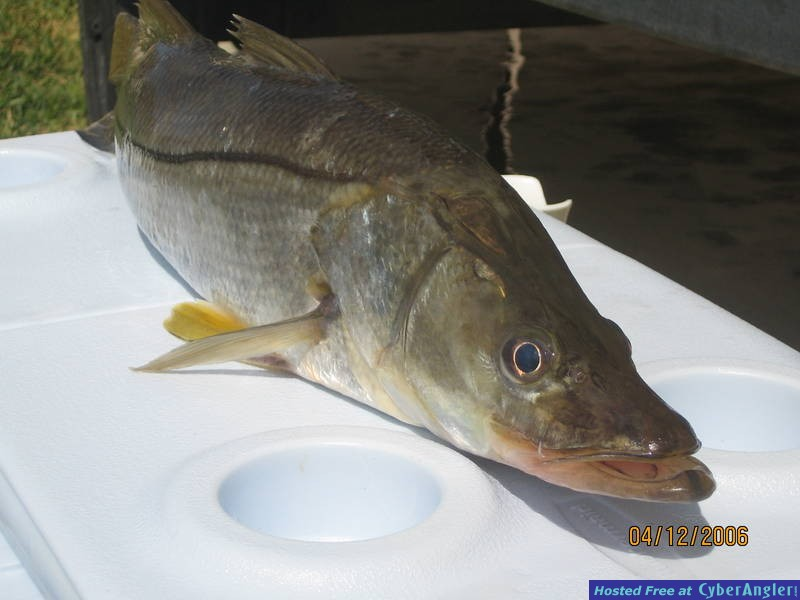 keeper snook 27 inches