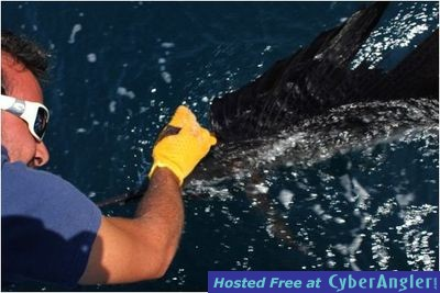 Captain Taco - Hooked Up Sportfishing - (954) 764-4344 or toll free @ (877)