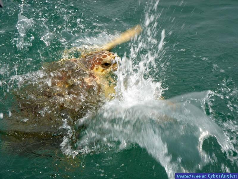 Unhappy Turtle