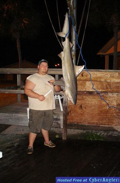 6.5 Foot Bull Shark