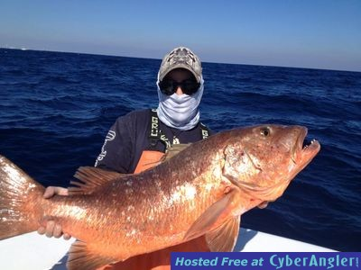 Northeast Winds and Live Baiting off Miami Produce Good Fishing