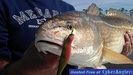 Redfish Close up