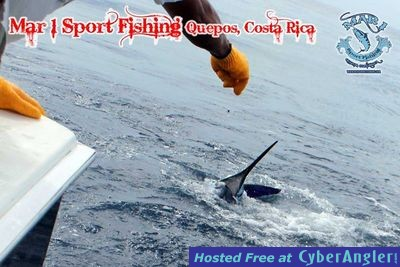 Sailfish in Quepos, Costa Rica March 3 2013
