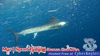 Fish Quepos, Costa Rica
