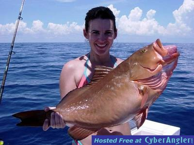 Red Groupers in Miami