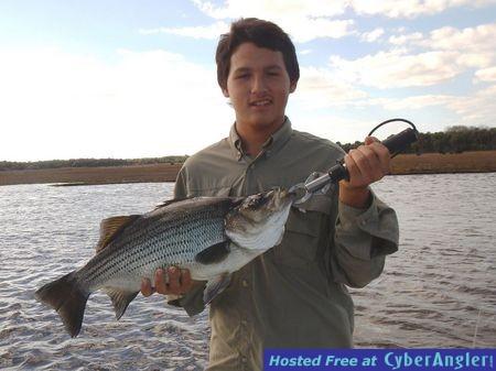 8-Pound_Striper_caught_on_the_St_Johns_River_02-01-2015