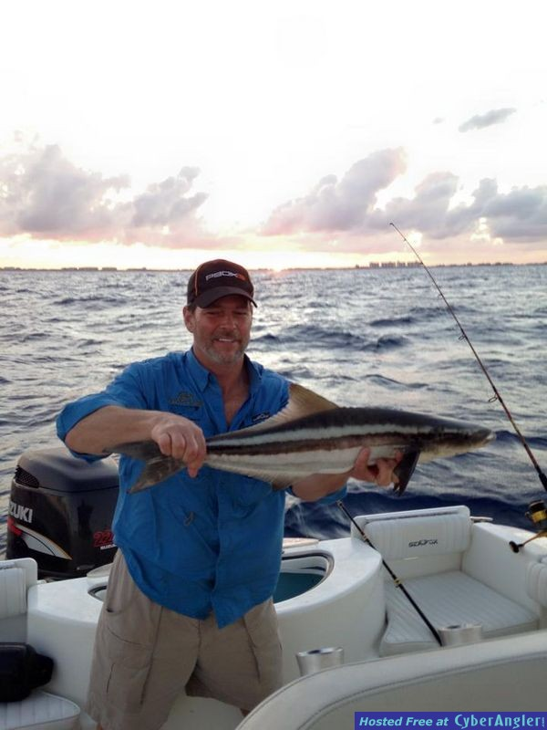 Cobia are here