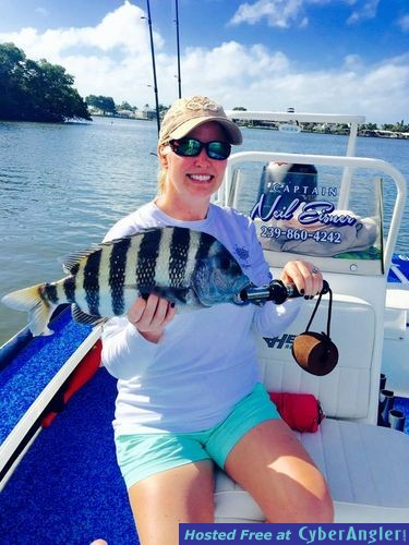 Estero Bay Sheepshead