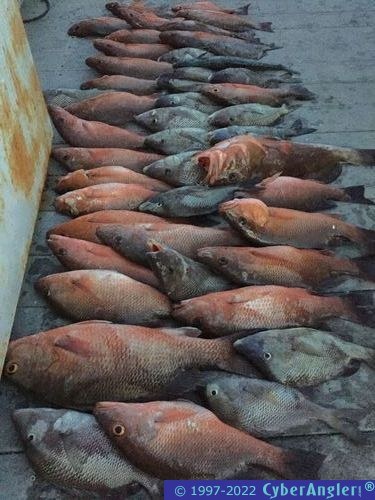 Offshore Fishing - Tampa, FL