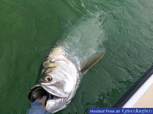 Sugarloaf_Key_tarpon_fishing_charters