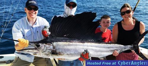 sailfish_1