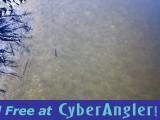 Hidden_Snook_Drone_fishing_Clearwater_beach