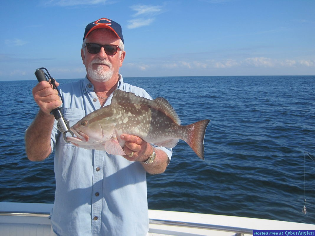 near 20-inch red grouper released
