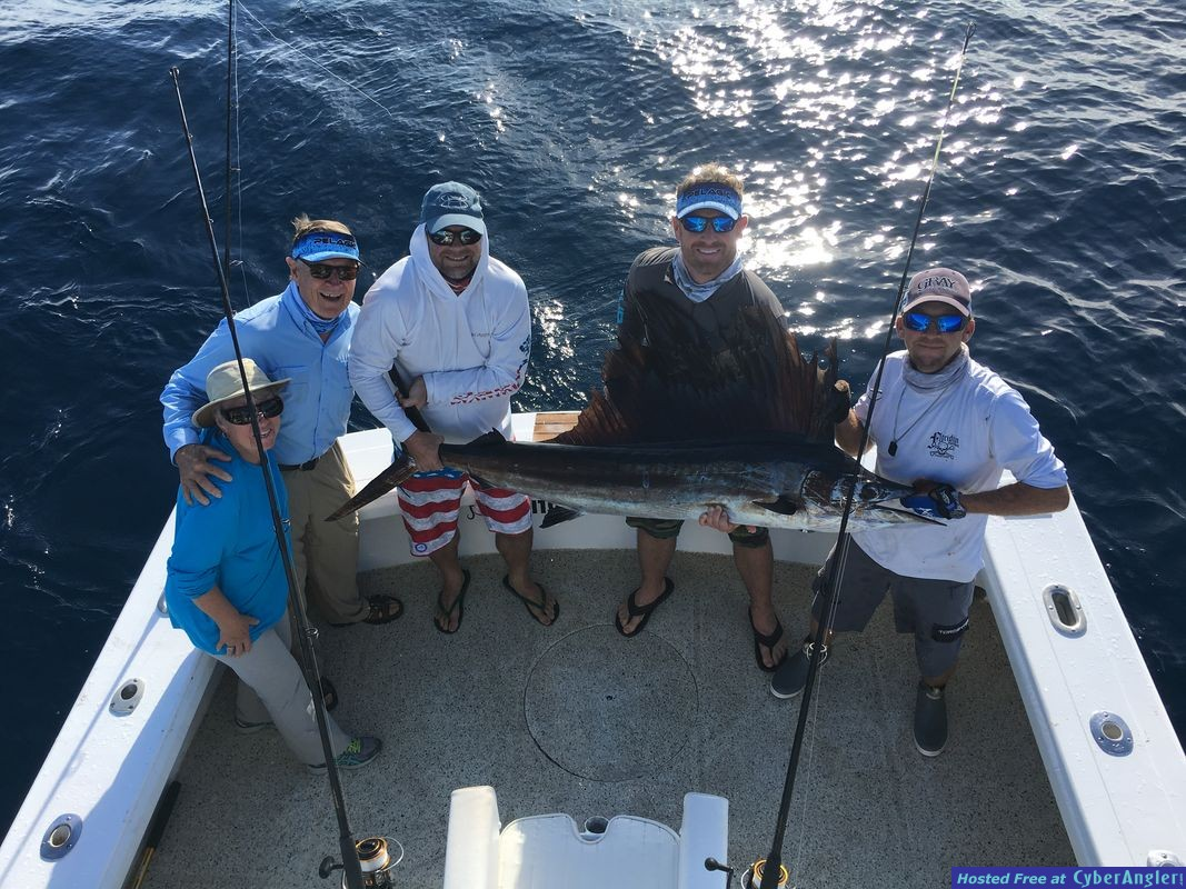 sailfish released