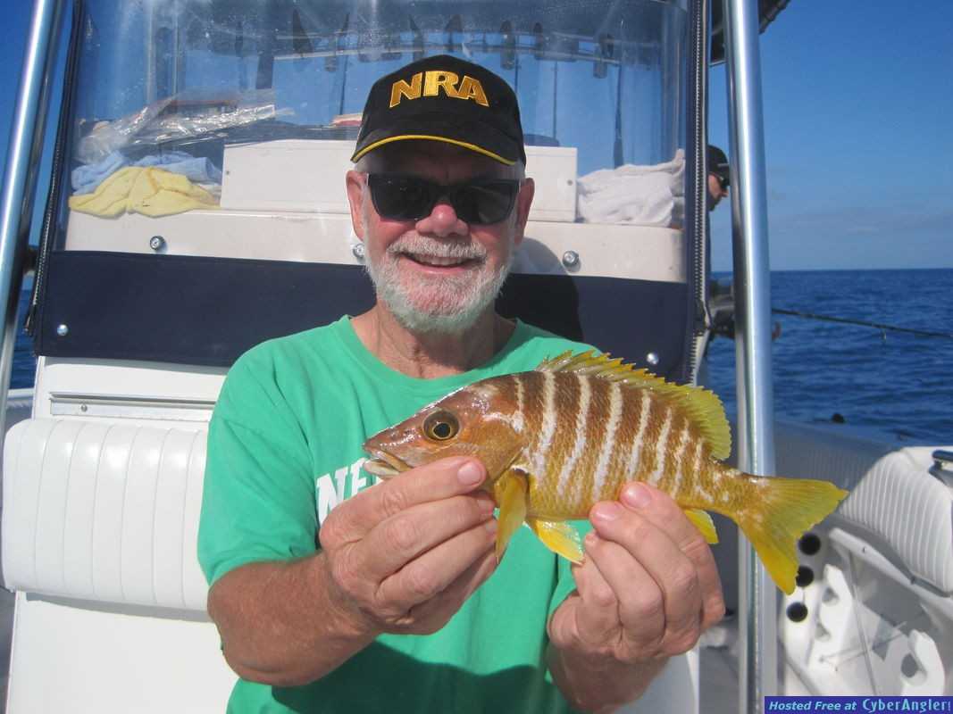 Schoolmaster snapper-Coneally released
