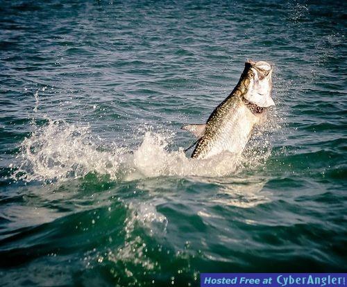 Flats Fishing Key West, FL