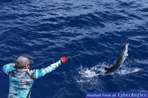 Catching Sailfish