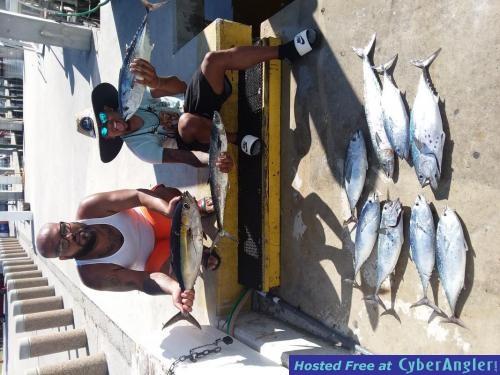 sailfish_luis