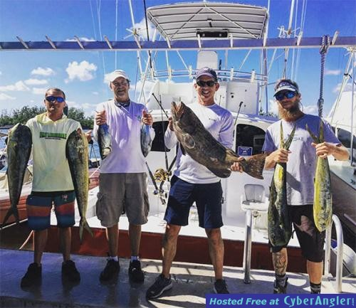 mahi_grouper