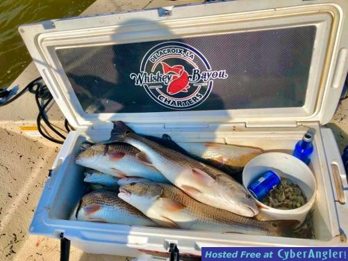 Whiskey_Bayou_Charters___Fishing_Report___Getting_in_on_the_Redfish_Bite___