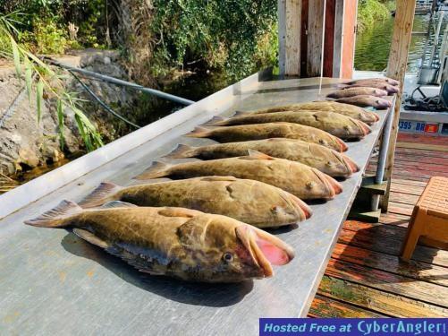 Florida_Fishing_Report_December_Homosassa_Crystal_River_Cedar_Key_Deep_Sea_