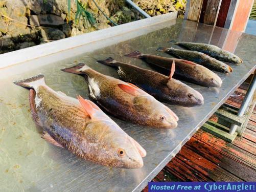 Crystal_River_Fishing_Charters_Reports_Florida_Redfish_Homosassa_Yankeetown