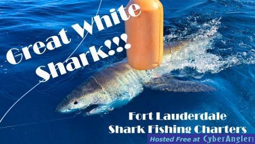 Great_White_Shark_Youtube_Thumbnail