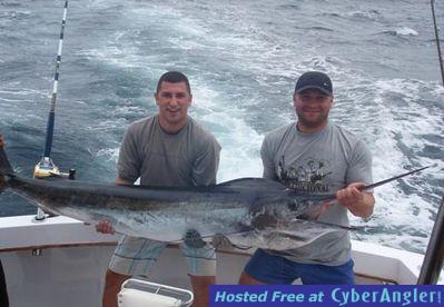Striped Marlin photo