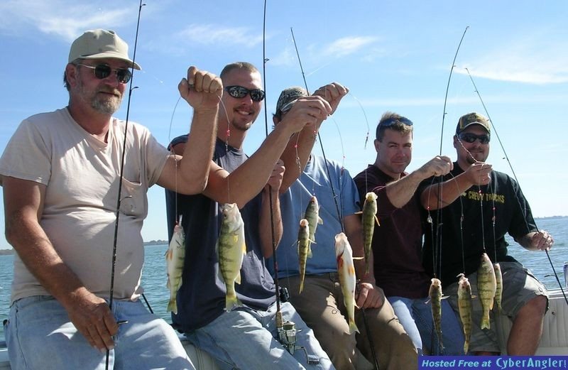 Tasty yellow perch caught on Lake Erie with Erie Quest Charters