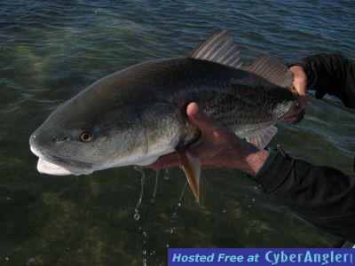 dripping_wet_redfish